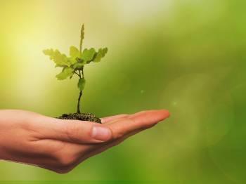Dia Mundial do Meio Ambiente, tempo de reflexão